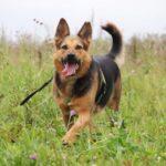 Эллада собака из приюта на пристройство, частный приют для бездомных животных Зов Предков zovpredkov.net фото 1