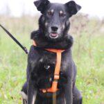 Диана собака из приюта на пристройство, частный приют для бездомных животных Зов Предков zovpredkov.net фото 5
