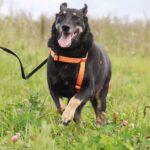 Диана собака из приюта на пристройство, частный приют для бездомных животных Зов Предков zovpredkov.net фото 1
