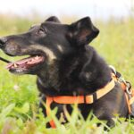 Диана собака из приюта на пристройство, частный приют для бездомных животных Зов Предков zovpredkov.net фото 6