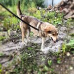 Донна собака из приюта на пристройство, частный приют для бездомных животных Зов Предков zovpredkov.net фото 1