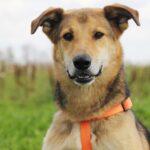 Чейз собака из приюта на пристройство, частный приют для бездомных животных Зов Предков zovpredkov.net фото 8