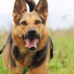 Эллада собака из приюта на пристройство, частный приют для бездомных животных Зов Предков zovpredkov.net фото 4