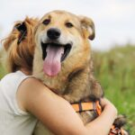 Чейз собака из приюта на пристройство, частный приют для бездомных животных Зов Предков zovpredkov.net фото 1