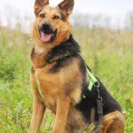 Эллада собака из приюта на пристройство, частный приют для бездомных животных Зов Предков zovpredkov.net фото 3
