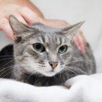 Ариша кошка из приюта на пристройство приют для бездомных животных Зов Предков zovpredkov.net фото 1