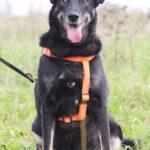 Диана собака из приюта на пристройство, частный приют для бездомных животных Зов Предков zovpredkov.net фото 4
