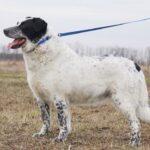 Шарм собака из приюта на пристройство частный приют Зов Предков фото 10