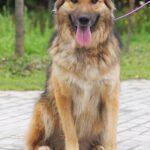 Гаврюша собака из приюта на пристройство, частный приют для бездомных животных Зов Предков zovpredkov.net фото 3