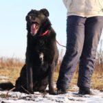 Шериф собака из приюта на пристройство, частный приют для бездомных животных Зов Предков zovpredkov.net фото 9