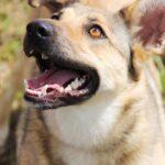 Дива собака из приюта на пристройство, частный приют для бездомных животных Зов Предков zovpredkov.net фото 6