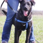 Дон собака из приюта на пристройство, частный приют для бездомных животных Зов Предков zovpredkov.net фото 1