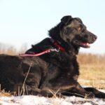 Шериф собака из приюта на пристройство, частный приют для бездомных животных Зов Предков zovpredkov.net фото 14