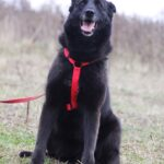 Васса собака из приюта на пристройство частный приют для собак Зов Предков фото 3