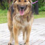 Гаврюша собака из приюта на пристройство, частный приют для бездомных животных Зов Предков zovpredkov.net фото 2