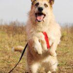 Рина собака из приюта на пристройство, частный приют для бездомных животных Зов Предков zovpredkov.net фото 4