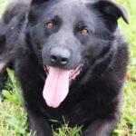 Шериф собака из приюта на пристройство, частный приют для бездомных животных Зов Предков zovpredkov.net фото 8