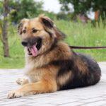 Гаврюша собака из приюта на пристройство, частный приют для бездомных животных Зов Предков zovpredkov.net фото 6