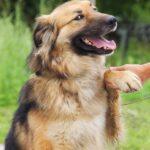 Гаврюша собака из приюта на пристройство, частный приют для бездомных животных Зов Предков zovpredkov.net фото 5