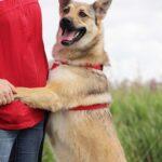 Дива собака из приюта на пристройство, частный приют для бездомных животных Зов Предков zovpredkov.net фото 5