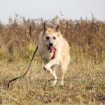 Рина собака из приюта на пристройство, частный приют для бездомных животных Зов Предков zovpredkov.net фото 3