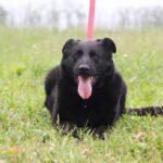 Шериф собака из приюта на пристройство, частный приют для бездомных животных Зов Предков zovpredkov.net фото 5