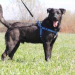 Дон собака из приюта на пристройство, частный приют для бездомных животных Зов Предков zovpredkov.net фото 4