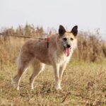 Рина собака из приюта на пристройство, частный приют для бездомных животных Зов Предков zovpredkov.net фото 5