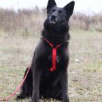 Васса собака из приюта на пристройство частный приют для собак Зов Предков фото 4