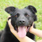 Шериф собака из приюта на пристройство, частный приют для бездомных животных Зов Предков zovpredkov.net фото 1
