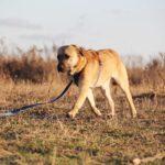 Байкал собака из приюта на пристройство, частный приют для бездомных животных Зов Предков zovpredkov.net фото 2