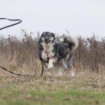 Тайна собака из приюта на пристройство, частный приют для бездомных животных Зов Предков zovpredkov.net фото 3
