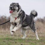 Тайна собака из приюта на пристройство, частный приют для бездомных животных Зов Предков zovpredkov.net фото 4