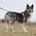 Тайна собака из приюта на пристройство, частный приют для бездомных животных Зов Предков zovpredkov.net фото 5