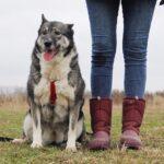 Тайна собака из приюта на пристройство, частный приют для бездомных животных Зов Предков zovpredkov.net фото 1