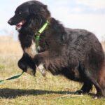 Лапка собака из приюта на пристройство, частный приют для бездомных животных Зов Предков zovpredkov.net фото 6