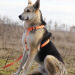 Лунтик собака из приюта на пристройство, частный приют для бездомных животных Зов Предков zovpredkov.net фото 3