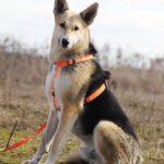 Лунтик собака из приюта на пристройство, частный приют для бездомных животных Зов Предков zovpredkov.net фото 4
