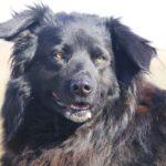 Лапка собака из приюта на пристройство, частный приют для бездомных животных Зов Предков zovpredkov.net фото 12