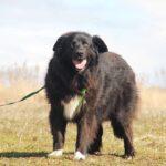Лапка собака из приюта на пристройство, частный приют для бездомных животных Зов Предков zovpredkov.net фото 8