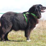 Лапка собака из приюта на пристройство, частный приют для бездомных животных Зов Предков zovpredkov.net фото 7
