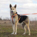 Лунтик собака из приюта на пристройство, частный приют для бездомных животных Зов Предков zovpredkov.net фото 1
