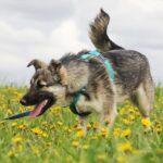 Мика собака из приюта на пристройство приют Зов Предков фото 3