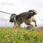 Мика собака из приюта на пристройство приют Зов Предков фото 2