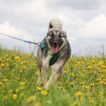 Мика собака из приюта на пристройство приют Зов Предков фото 4