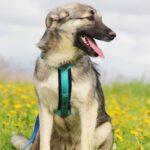Мика собака из приюта на пристройство приют Зов Предков фото 8